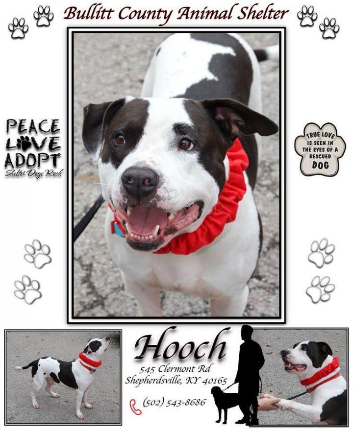 Hooch 3