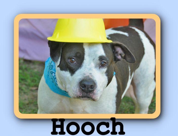 Hooch 1