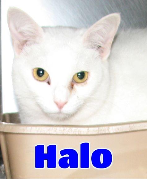 #4412 Halo - sponsored