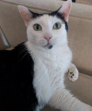 Tinka is a quiet sweet girl who loves people She will follow you around nestle next to you on the
