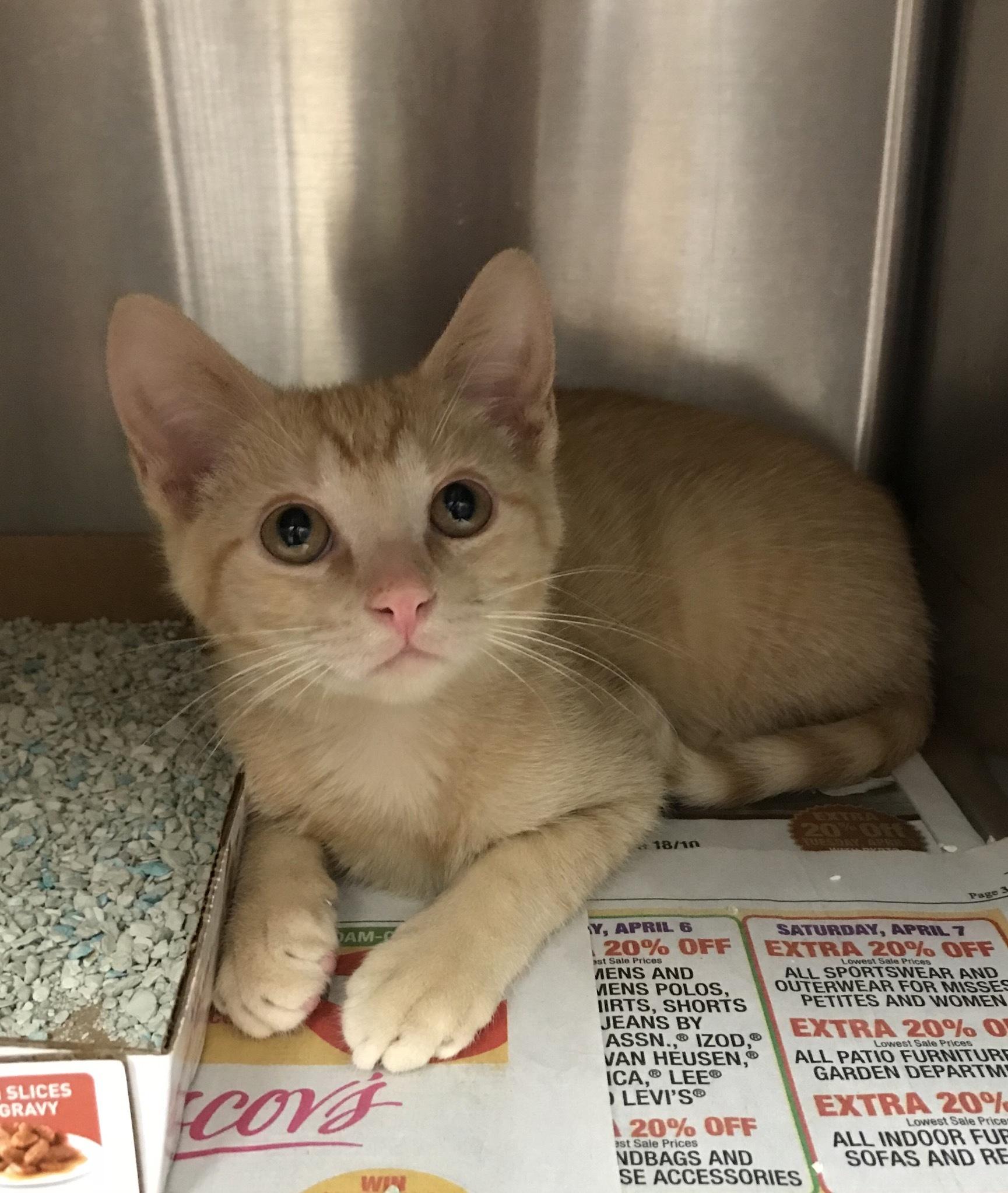 Cat for Adoption – Clancey, near Sayreville, NJ   Petfinder