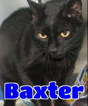 #61 Baxter