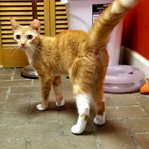 . Spice Girl NO cats .