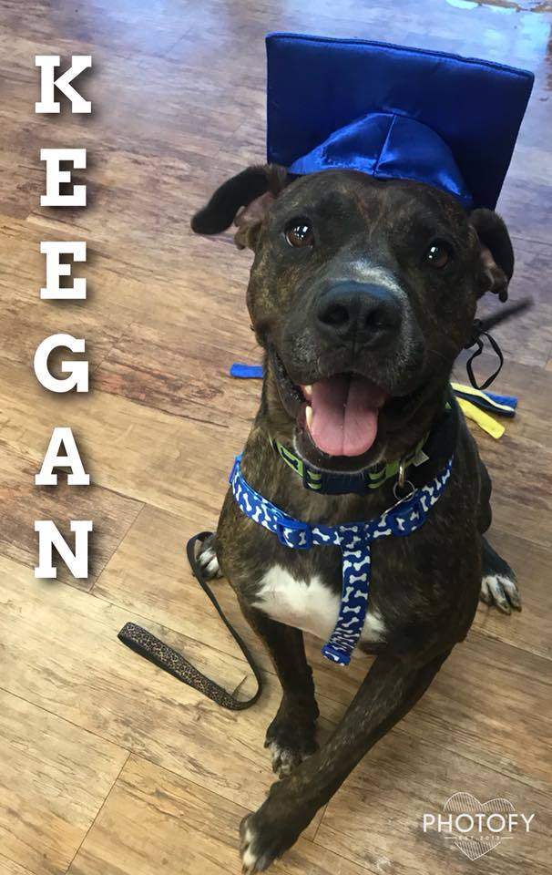 Keegan, an adoptable Mastiff & Boxer Mix in Oklahoma City, OK