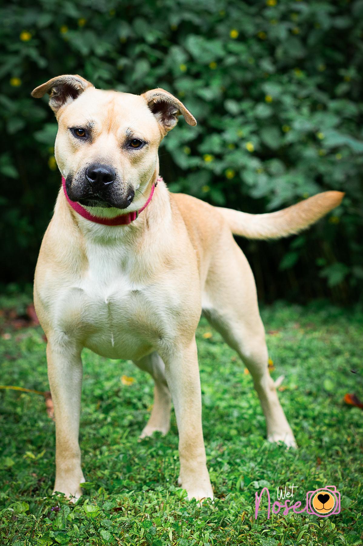 Dog For Adoption Barney Near Grafton Wv Petfinder
