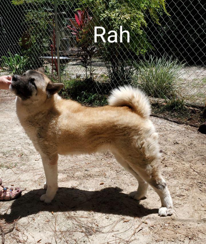 Rah 6