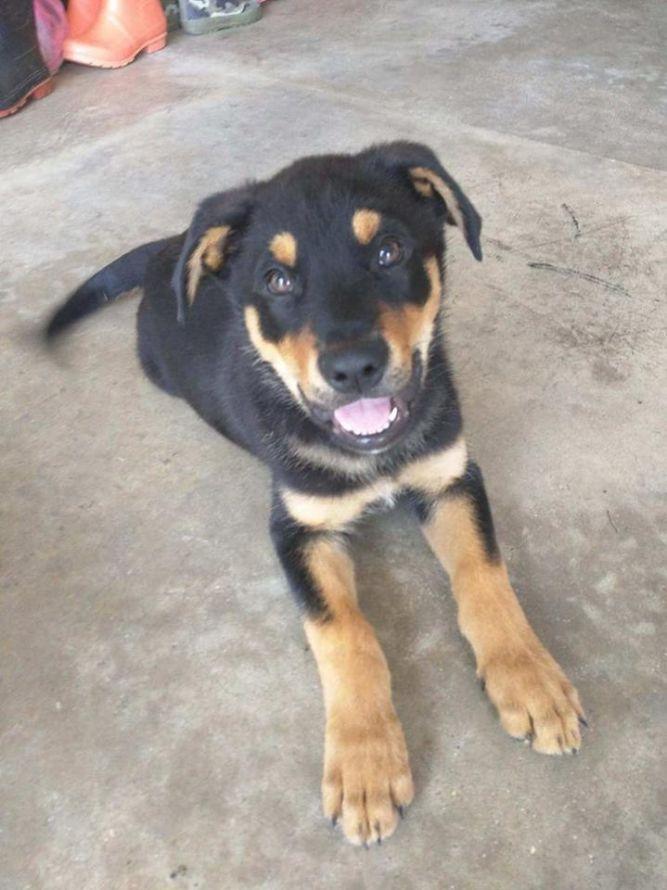 Carter! Puppy in foster!
