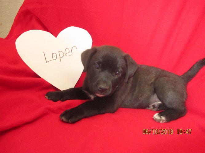Loper (Hank the Cowdog)