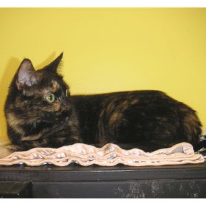 Stella is female dark tortie She originally came to Buddy from Second Chance as