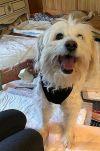Chinese Crested Dog Dog: JENNY & MISSY