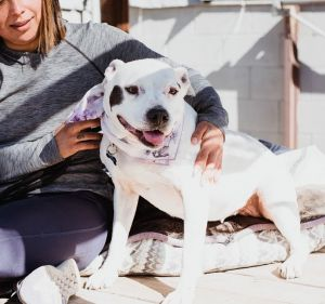 Meet Laila She is an 11 year old Pit Bull mix that we rescued from the South LA