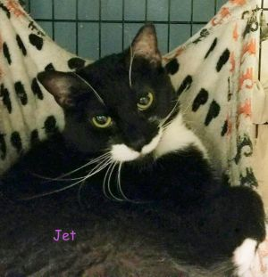 JET Meet our Ms JET who is 3 yrs and 8 mos old JET came to the shelter with her