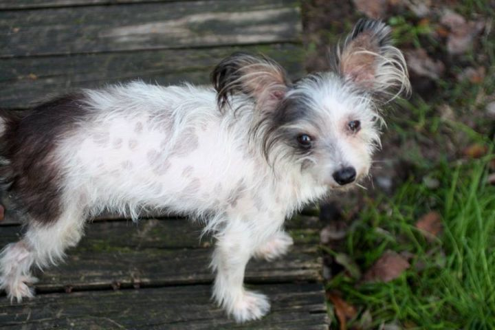 ChiChi (only dog home) 4