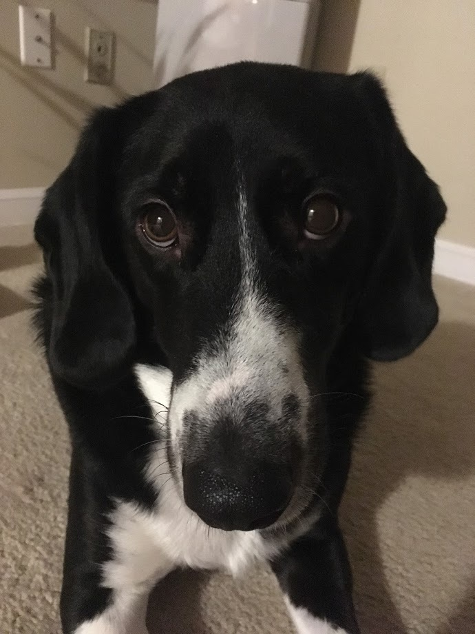 Leon - FOSTER OR ADOPT