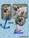 Pug Dog: Mojo