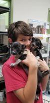 Chihuahua Dog: Baxter