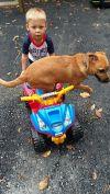 German Shepherd Dog Dog: Delphi