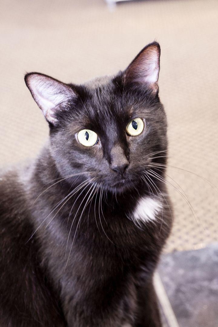 Blackie 1