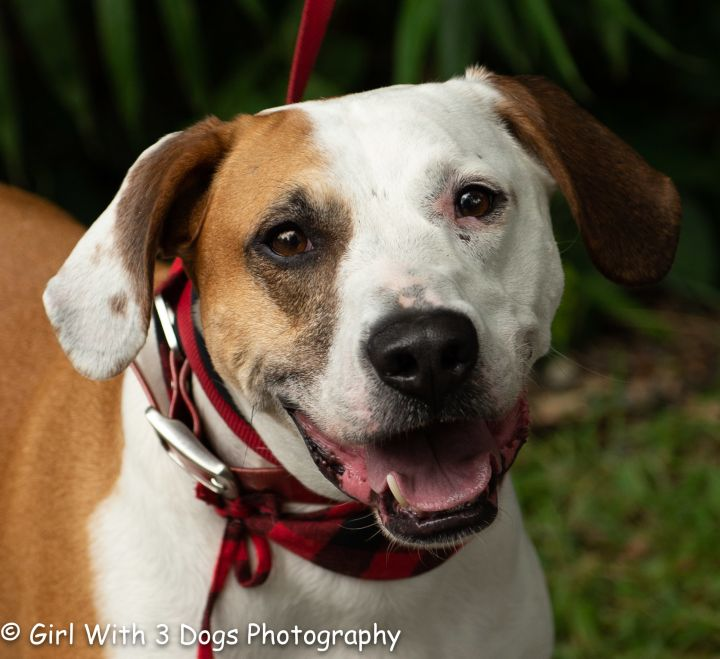 Dixen, an adoptable Hound Mix in Sanford, NC_image-1