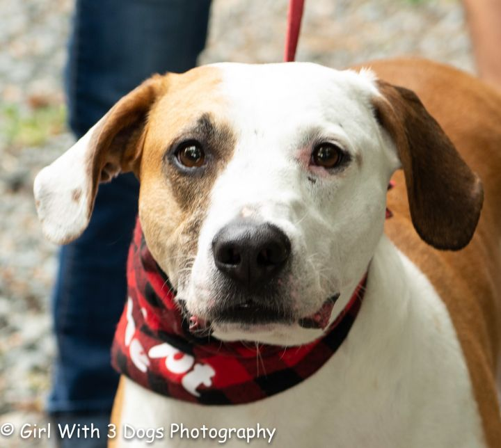 Dixen, an adoptable Hound Mix in Sanford, NC_image-4