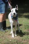 Dalmatian Dog: Ayesha