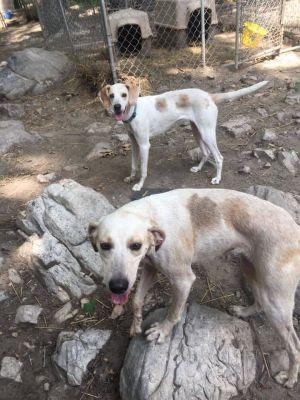 Dog for adoption - Jan, a Hound in Chantilly, VA | Petfinder