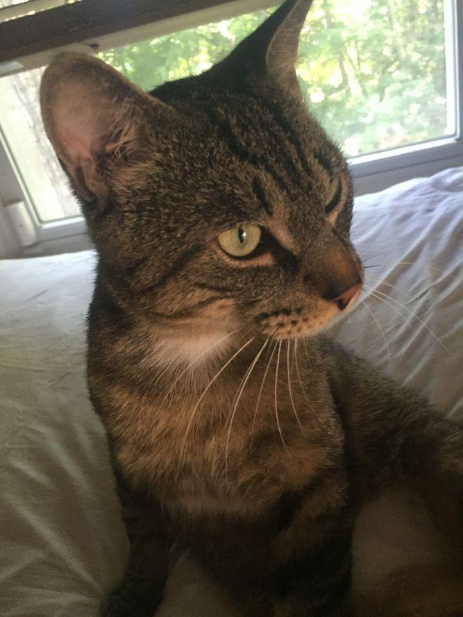 Maverick!  Sweet, Loving, Cat Character!