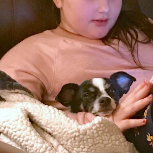Dog For Adoption Oscar Ga Near Marietta Ga Petfinder