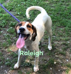 Raleigh! Hound Puppy!