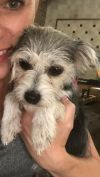 Yorkshire Terrier Yorkie Dog: Dixie - RESCUING ANGELS RESCUE