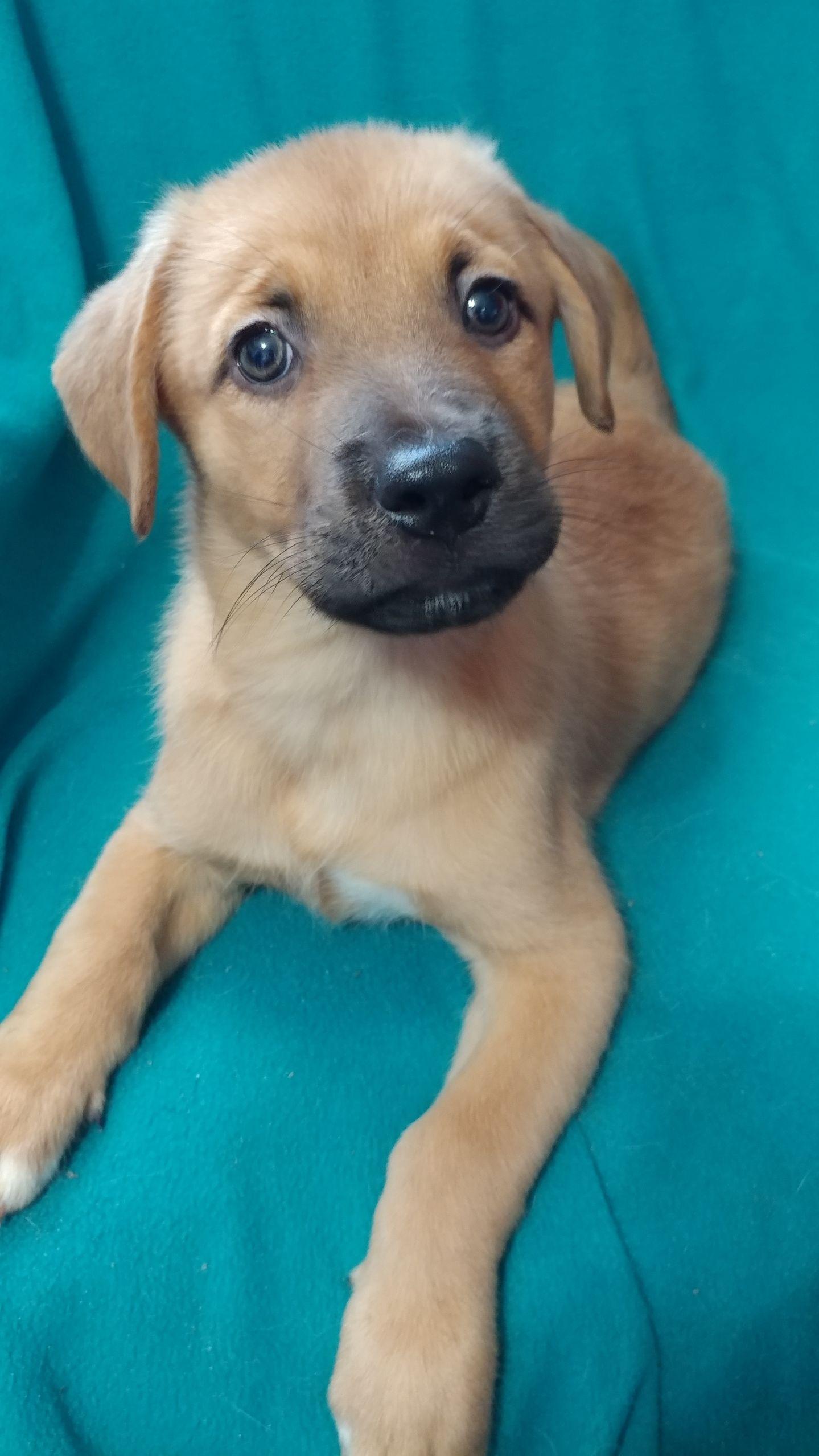 Dog for Adoption – Mars JN, near Von Ormy, TX   Petfinder