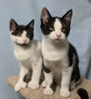 Tic Tac (male) and Poly (Polydactyl female)