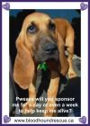 Bloodhound Dog: Sponsers Needed For Peanut