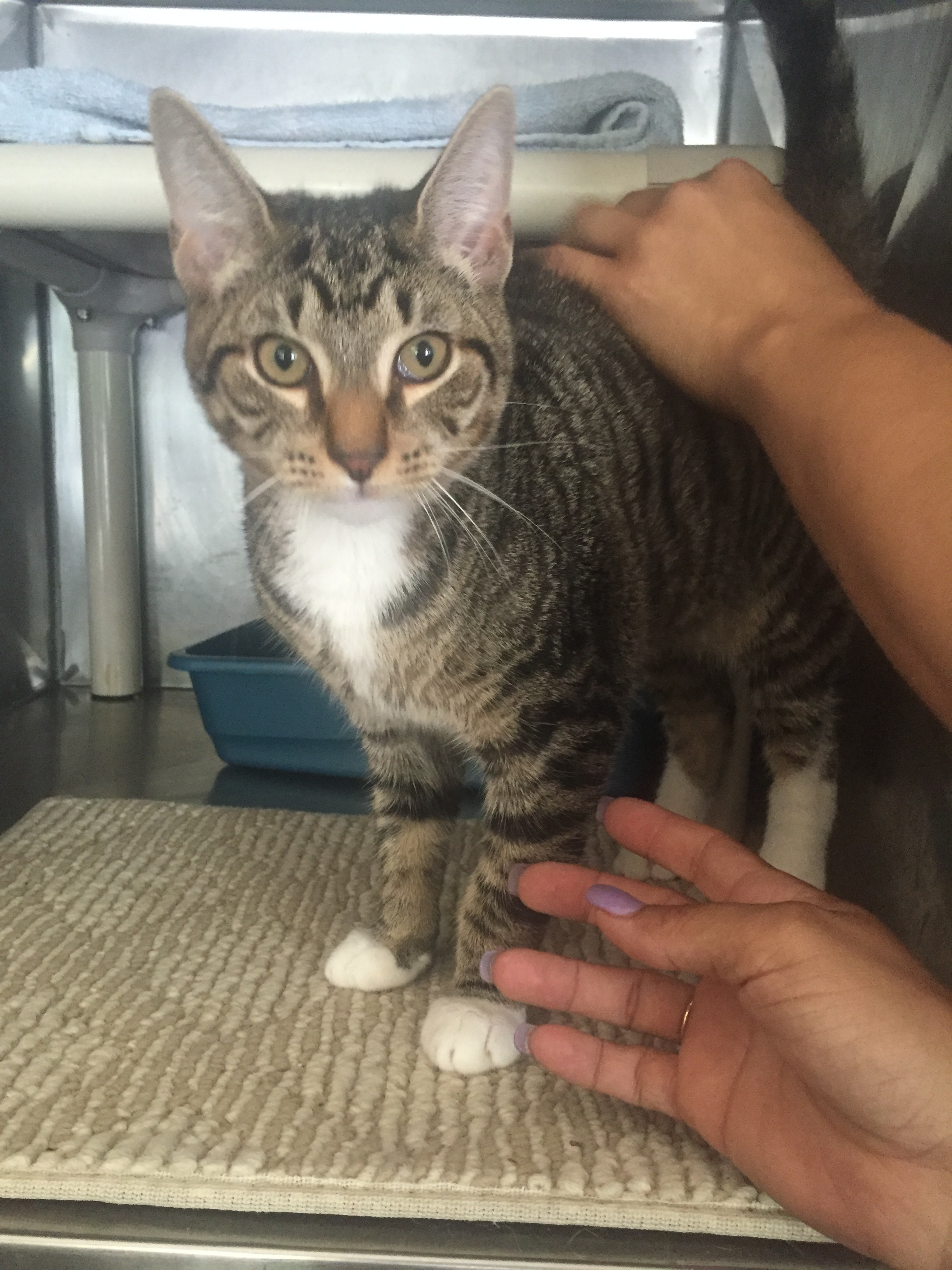 Mittens- Gentle Affectionate Young Boy!