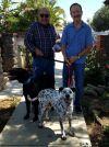 Dalmatian Dog: Tango ADOPTED