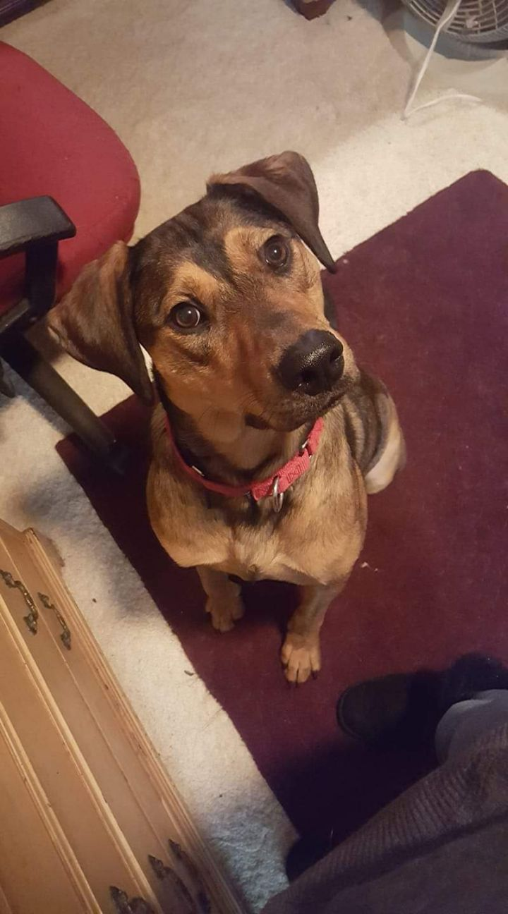 Manny - $100, an adopted Hound Mix in Milwaukee, WI