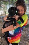 Great Dane Dog: GDX Missy