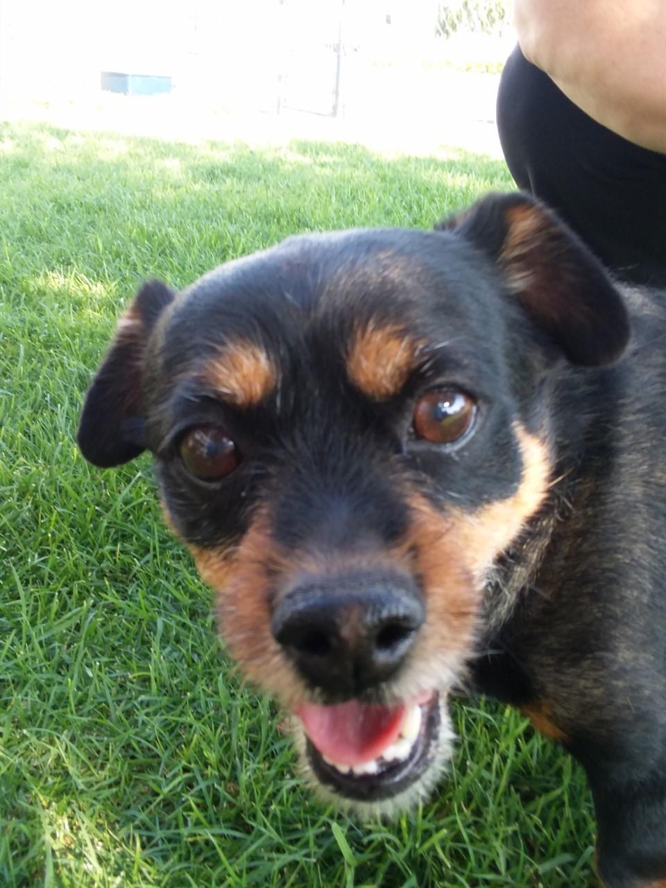 Dog For Adoption Papi Near Hermiston Or Petfinder