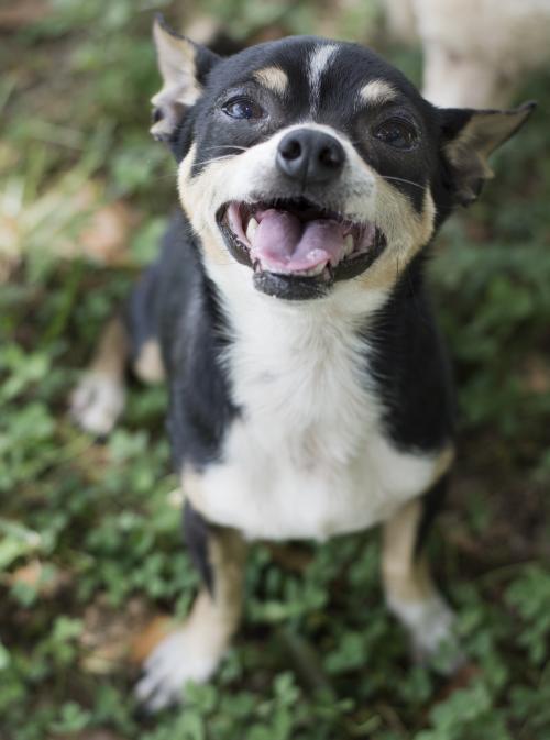 Dog For Adoption Papi With Margie Near Pacolet Sc Petfinder