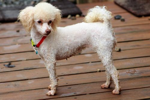 Dog For Adoption Margie With Papi Near Pacolet Sc Petfinder