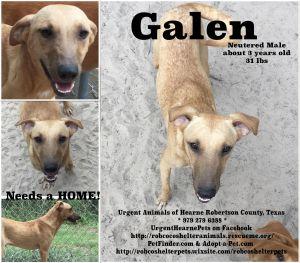 Galen Mountain Cur Dog
