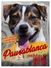 Beagle Dog: Dooley