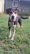 Australian Shepherd Dog: Hayden
