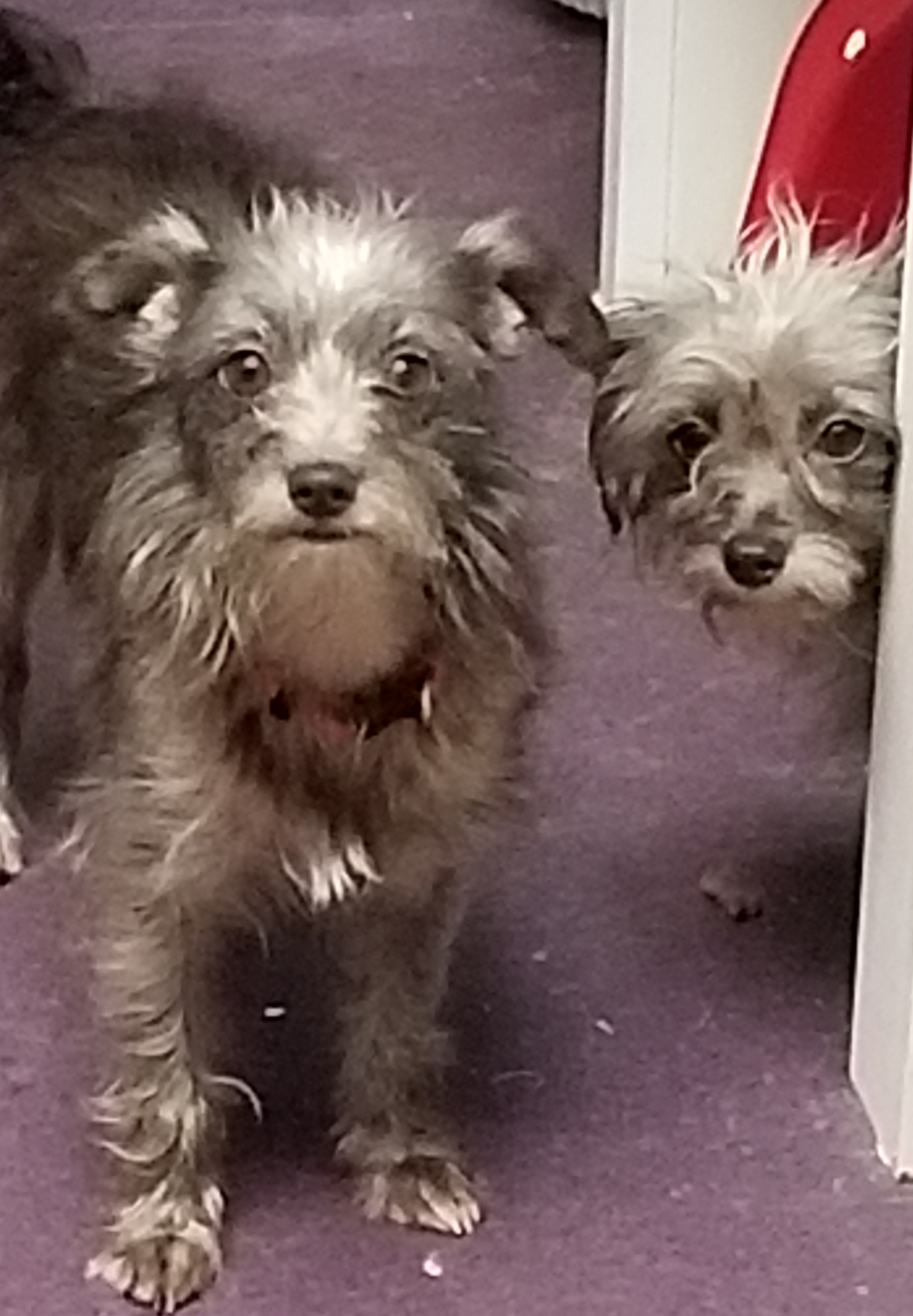 Reese and Rue (BONDED PAIR)