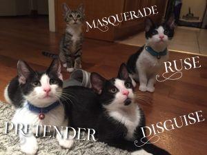 The 'Masquerade' kittens