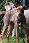 Doberman Pinscher Dog: Emenem