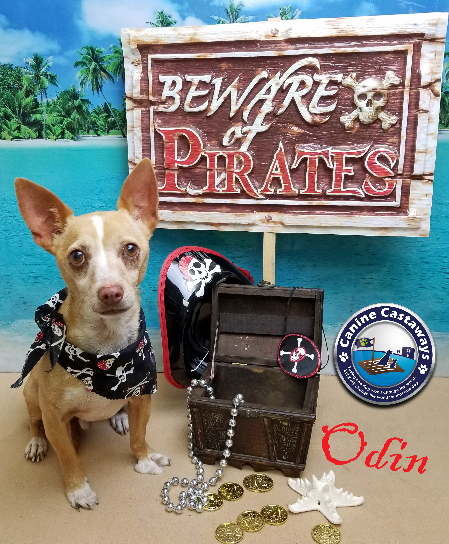 Dog for Adoption – Odin, near Arcadia, FL | Petfinder