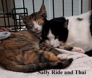 Thai and Sally Ride ( bonded pair)