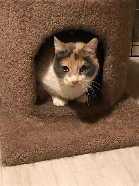 Sassafras - lap cat 2