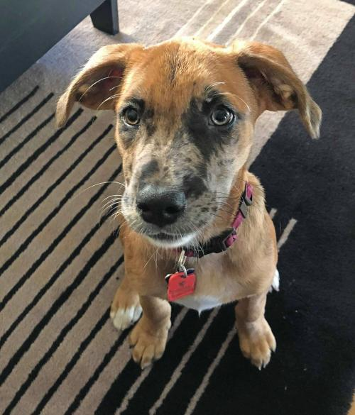 Dog For Adoption Brighton Puppy Near Minneapolis Mn Petfinder